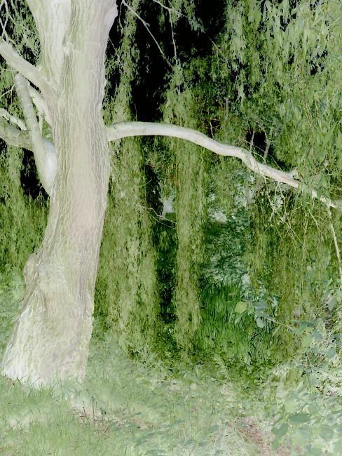 Elise Vincent - Derrière les branches